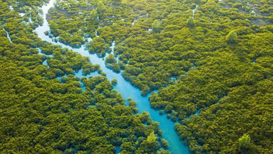 钦州茅尾海红树林景色迷人